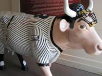 Yogi_cow