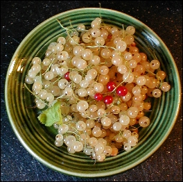 white_currants