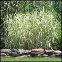 grasses_2