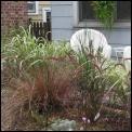 grasses_5