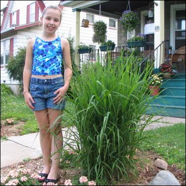 grasses_large_2