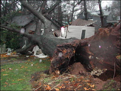 Tree_down_on_douglas_2